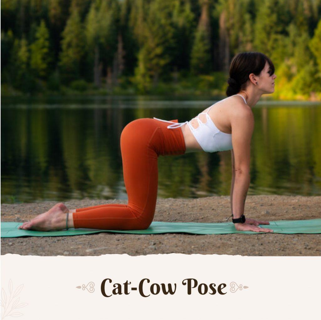 Cat Cow Pose